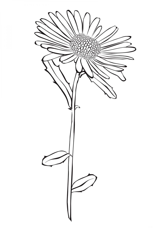 раскраска цветок астра распечатать помните как