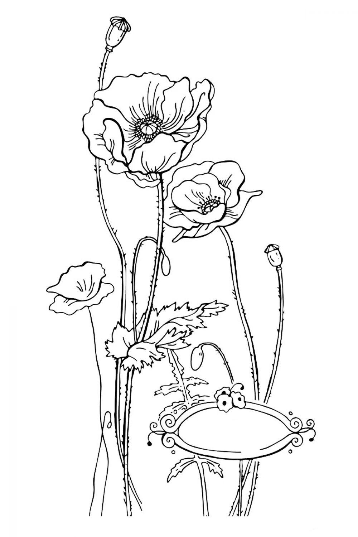 Раскраска Цветы мака - распечатать бесплатно