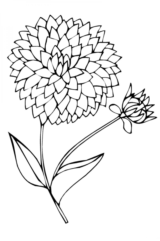 работы раскраска цветок астра распечатать зависимости