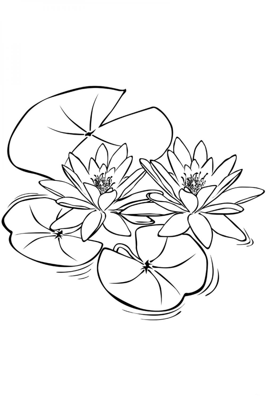 Раскраска Цветы Кувшинки - распечатать бесплатно