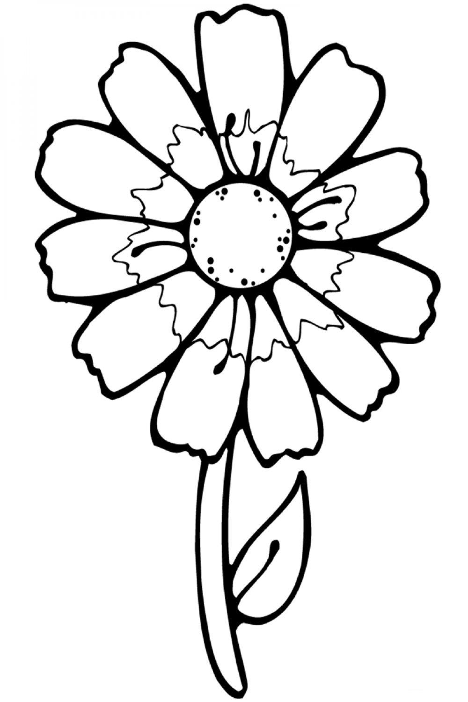Раскраска Цветы Простая ромашка - распечатать бесплатно