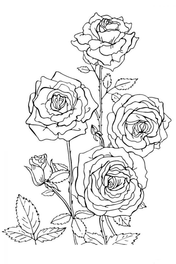Раскраска Цветы Розы - распечатать бесплатно